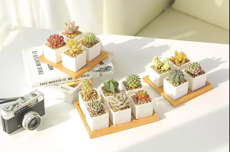 Small-potted-plants
